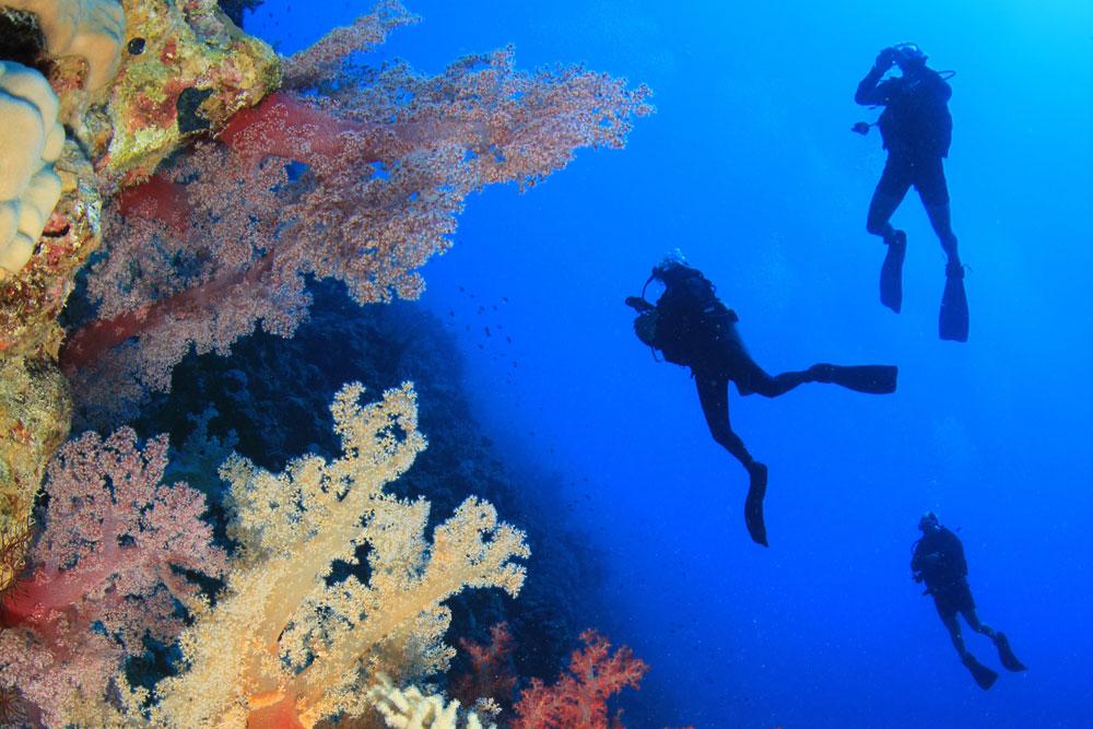 Scuba Diving Tour to the Philippines | DIVE LOFT KRK